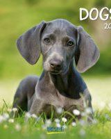 Dogs Kalender 2018